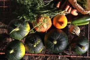 La première gelée d'automne frappe le jardin sans pétrole | Les colocs du jardin | Scoop.it