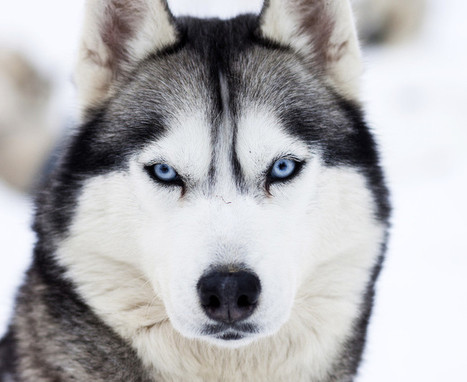 Science Daily: News & Articles in Science, Health, Environment & Technology | Evolution of Dog Cancer | Scoop.it