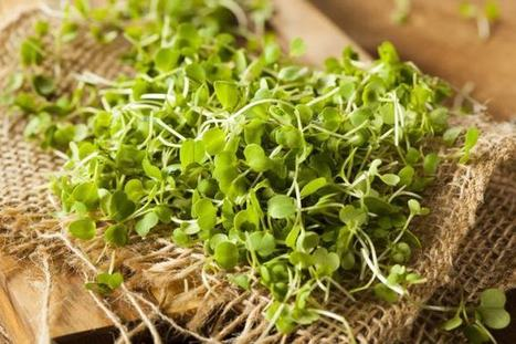 How to Grow Sandwich and Salad Microgreens | Superfood Chia Dressing | Scoop.it