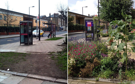 The Incredible, Edible Bus Stop - Modern Farmer | green | Scoop.it