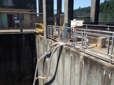 As Willamette Project dam work inches along, Corps works out deadline ... - OregonLive.com   Fish Habitat   Scoop.it