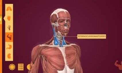 Arloon Anatomy: El Cuerpo Humano, una app para aprender anatomía - Educación 3.0 | Banco de Aulas | Scoop.it