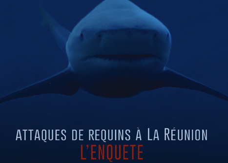 Attaque de requins à la Réunion: Canal + a enquêté, diffusion le 29 mai | Crise requins | Scoop.it