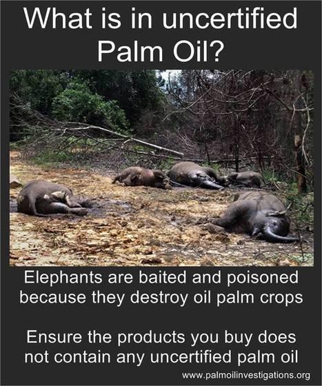 What Is Uncertified Palm Oil?   GarryRogers NatCon News   Scoop.it