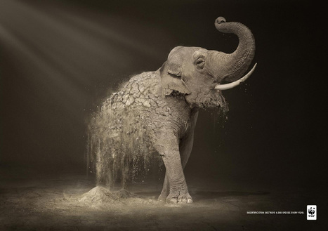 WWF: Desertification Elephant   I wish I'd thought of that   Scoop.it