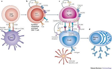 Designing A Faster, Better, Stronger Immune Response | immunology | Scoop.it