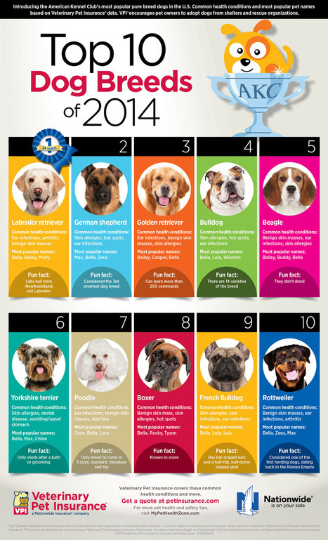 Top 10 Dog Breeds Infographic | Dog Lovers | Scoop.it