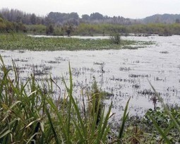 Applaud Government for Conserving Wetlands | GarryRogers Biosphere News | Scoop.it