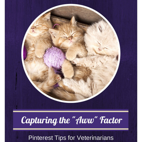 Pinterest for Veterinarians – Tips for Getting Started | Pinterest for Business | Scoop.it