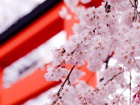 Business Opportunities in Japan | Entrepreneurship in Japan | Scoop.it
