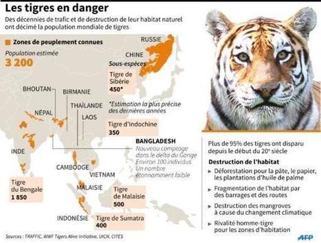 Le tigre disparaît de la plus vaste mangrove du monde | Education environnement | Scoop.it