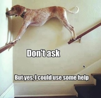 Sunday: #Funny #Photo Don't Ask, but yes I could use some help   Egyptday1   Scoop.it