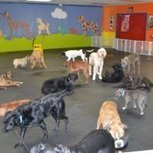 Happy Tails Doggie Daycare Center of... - Network Traverse City, Michigan | Facebook | Traverse City Businesses | Scoop.it