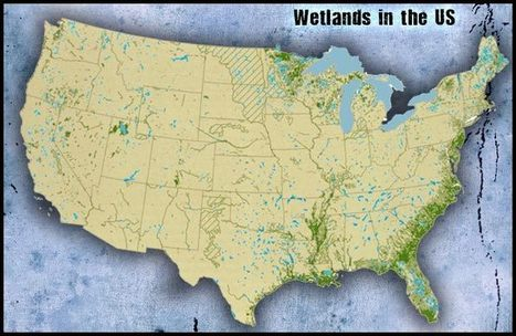 Wetlands Biome - Untamed Science | Bogs r hogs | Scoop.it