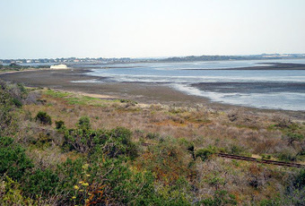 Planners need to allow for Coastal wetlands migration due to sea level rise ... - Sydney Indymedia | Australia Wildlife | Scoop.it