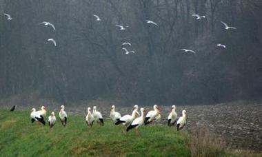Un groupe de cigognes fait escale à Vaulx-en-Velin / Cadre de vie / Actualités / Journal / Vaulx-en-Velin | Equitable & durable | Scoop.it