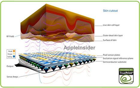 iPhone 5S : le capteur biométrique d'empreintes digitales encore ... | Stratégie d'entreprise | Scoop.it