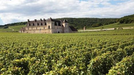A vine guide to Burgundy | Pinot Post | Scoop.it