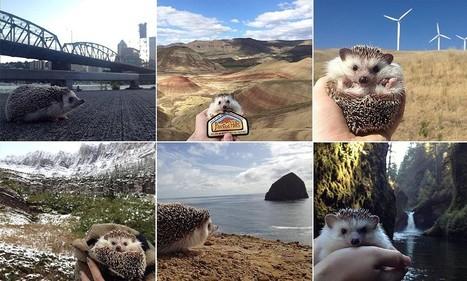 Meet Biddy the travelling hedgehog | Fashion | Scoop.it