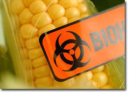 """""""Stunning"""" Difference of GM from non-GM Corn 