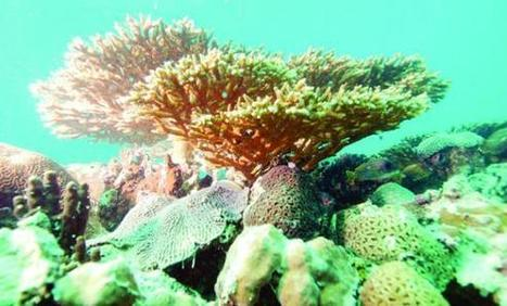 Pollution threatens Gulf coral reefs | Planet Earth | Scoop.it