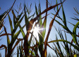 Climate Change To Blame For Recent Droughts, Heat Waves: Study | Climate change challenges | Scoop.it