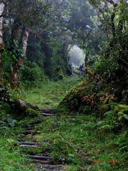 Hiking Mt. Amuyao, Mountain Province ~ Jovial Wanderer   Philippine Travel   Scoop.it