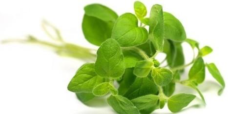 Olio essenziale di origano: 10 utilizzi per prendersi cura di se' - greenMe.it | Benessere Naturale | Scoop.it