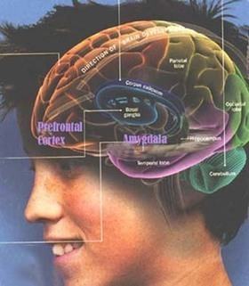 The Positives and Negatives of the Teenage Brain | Kiwi Commons | Teenagers Today | Scoop.it