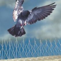 Bird Traps - Effective Bird Pest Control | Bird Control Melbourne | Scoop.it