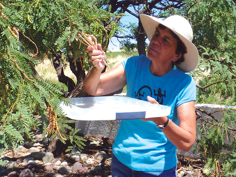 Workshop Friday on the many uses for mesquite | Benson-News Sun | CALS in the News | Scoop.it