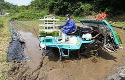 [Eng] Expérience de riz planté près de la centrale nucléaire expérience retirés après le retrait du sol contaminé | The Mainichi Daily News | Japon : séisme, tsunami & conséquences | Scoop.it