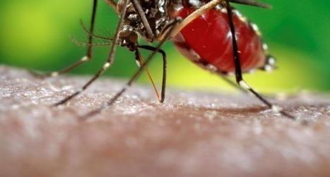 Attention au virus «zika» | Toulouse La Ville Rose | Scoop.it