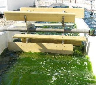 イスラエルの技術を活用した藻類培養施設を宮城県石巻市に建設。健康食品や医薬品、バイオ燃料の原料としての販売を目指す | PlantFactory | Scoop.it