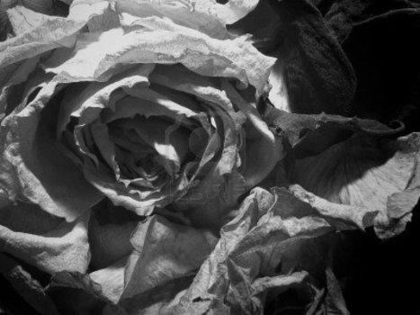 «Les blanches pour les morts» (Heiner Müller)   Le SauteRhin   Merveilles - Marvels   Scoop.it