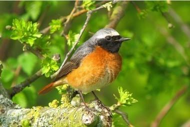 Rare birds spotted at Sanctuary reserve - Derby Telegraph. | CSPB Ornithologist's Alliance. | Scoop.it