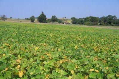 Dossier - Le soja: Midi-Pyrénées trouve le haricot magique - 2e partie | Concours national de la création agroalimentaire Bio | Scoop.it