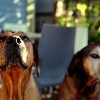 12 Most Intriguing Success, Business, and Life Strategies I've Learned From Dogs | Life @ Work | Scoop.it