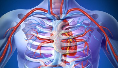 Growing new arteries, bypassing blocked ones | Heart diseases and Heart Conditions | Scoop.it