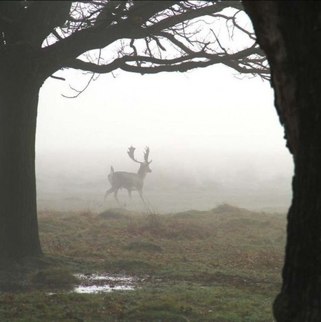 Breathtaking Deer in the Mist Photography by Sirli Raitma | 123 ... | Inspiration | Scoop.it