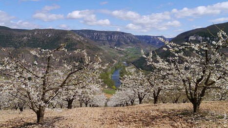 Ma découverte de l'Aveyron au printemps | L'info tourisme en Aveyron | Scoop.it