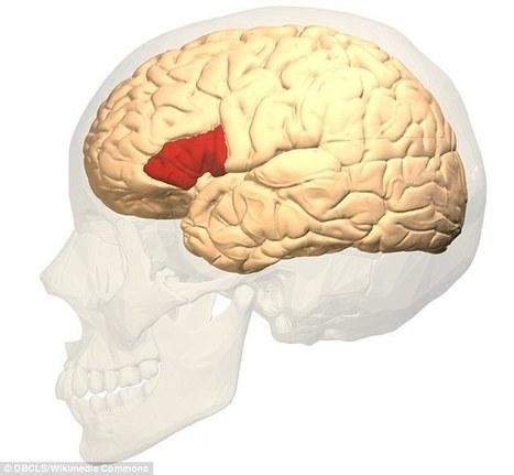 Secret behind the 'gift of the gab' unlocked in the brain | Kickin' Kickers | Scoop.it
