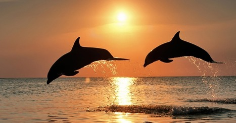 Sign the petition: BP must restore the Gulf of Mexico for dolphins! | Marine Conservation and Ecology | Scoop.it
