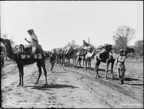 Afghan camel train on the Wanaaring Road, Warrego district - Powerhouse Museum Collection | Year 5 History: The Afghan Cameleers | Scoop.it