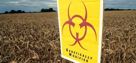 EU Ready For 17 New Genetically Modified Products | Karmic Pantry | Scoop.it