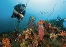Diving Dominica North to South | All about water, the oceans, environmental issues | Scoop.it