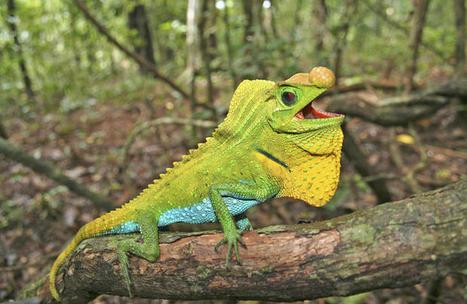 Près de 19 % des reptiles sont menacés d'extinction   Biodiversité & Relations Homme - Nature - Environnement : Un Scoop.it du Muséum de Toulouse   Scoop.it