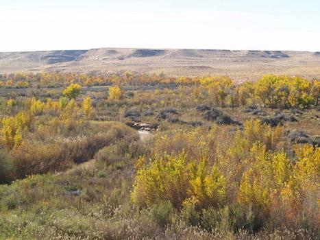 Utah's San Rafael Swell is battleground in war on tamarisk - Salt Lake Tribune | Native Plants | Scoop.it