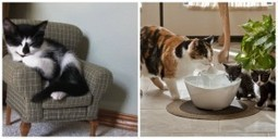 10 Ways You Can Truly Spoil Your Cat Rotten | Catnip Daily | Scoop.it