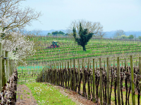 Experiencing the art of living in the vineyards of Cognac | The Cognac and its vineyards | Scoop.it
